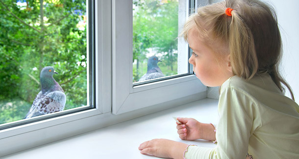 A child looking at birds outside the window.