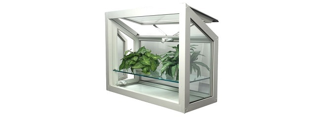 greenhouse window with plants